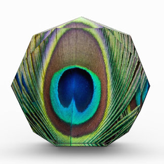 Peacock feather acrylic award