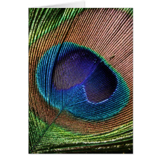 Peacock feather beautiful blue blank note card