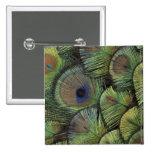 Peacock feather design 2 pinback button