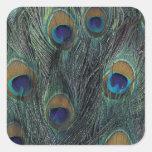 Peacock feather design sticker