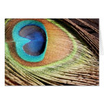 Peacock Feather Designs Greeting Card