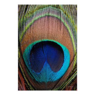 Peacock Feather Detail Art Poster