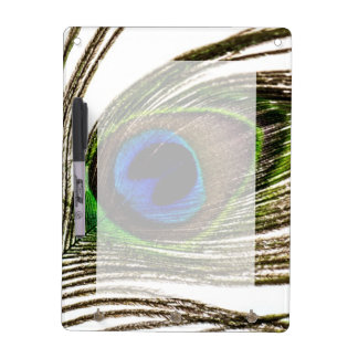 Peacock Feather Dry Erase Board
