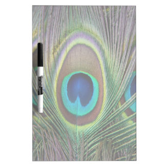 Peacock feather Dry-Erase boards