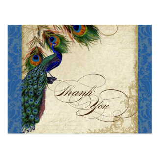Peacock & Feather Formal Thank You Note Royal Blue Postcard