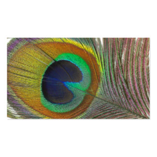 Peacock Feather Garden Event Drink Cards Business Cards
