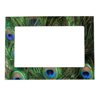 Peacock Feather Magnetic Frame