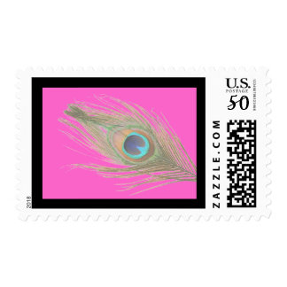 Peacock Feather on Pink with Dark Border Postage
