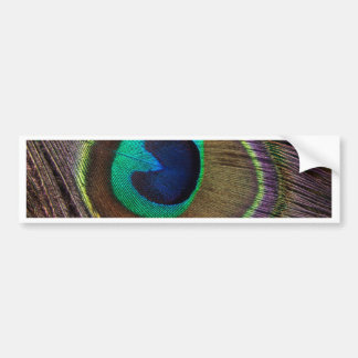 Peacock Feather On Right Side Close-Up Car Bumper Sticker