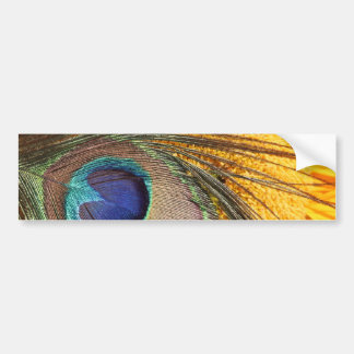 Peacock feather on sunflower bumper sticker