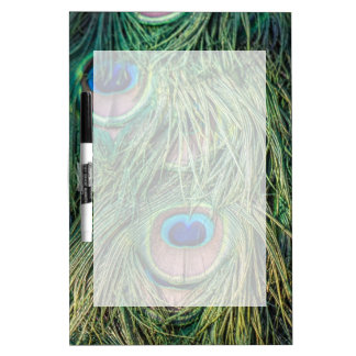 Peacock Feather Pattern Dry Erase Whiteboards