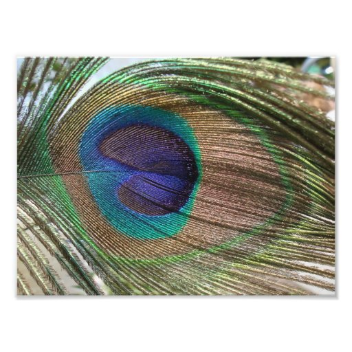 peacock feather photo print
