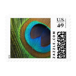Peacock Feather Postage Stamp