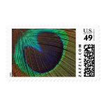 Peacock feather postage stamps