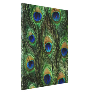 Peacock Feather Print Gallery Wrapped Canvas