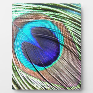 Peacock Feather Product Display Plaque