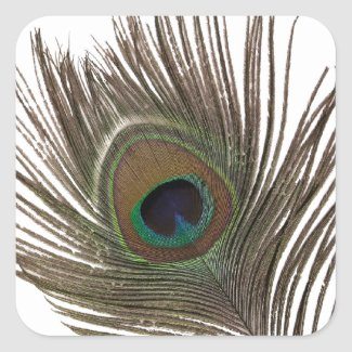Peacock feather square sticker
