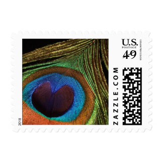 Peacock Feather Stamps