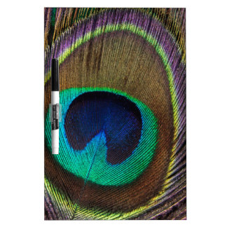 Peacock Feather Upright Close-Up Dry-Erase Board