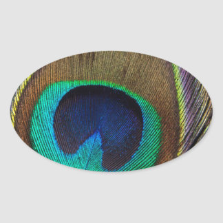Peacock Feather Upright Close-Up Oval Sticker