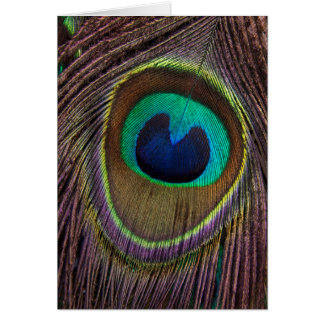 Peacock Feather Upside Down Close-Up Card