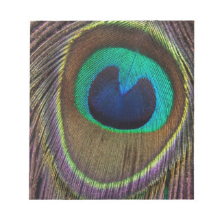 Peacock Feather Upside Down Close-Up Notepad