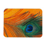 Peacock feather with Orange Glitter Still Life Rectangular Photo Magnet