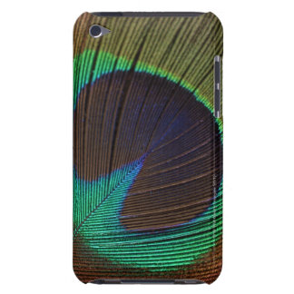 Peacock feathers 3 iPod touch cases