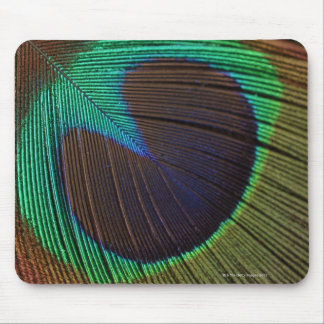 Peacock feathers 3 mousepads