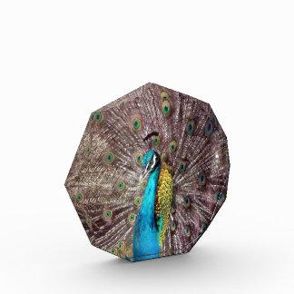 peacock feathers acrylic award