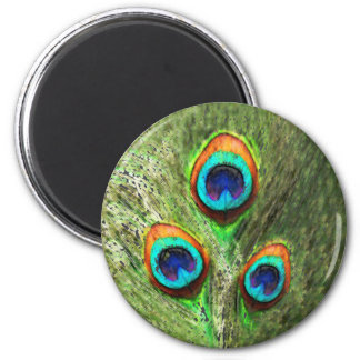 Peacock Feathers Bird Refrigerator Magnet