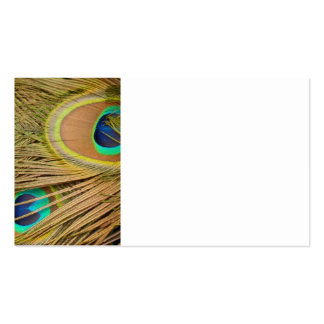 Peacock Feathers Business Card