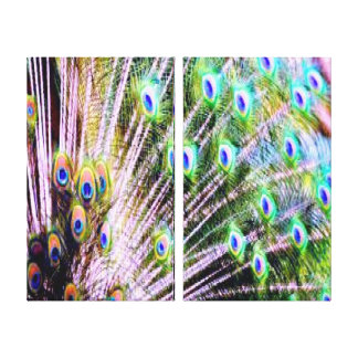 Peacock Feathers Gallery Wrapped Canvas