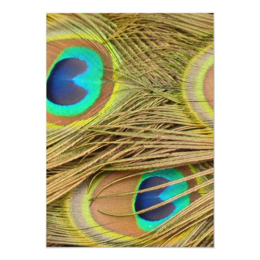 Peacock Feathers Card