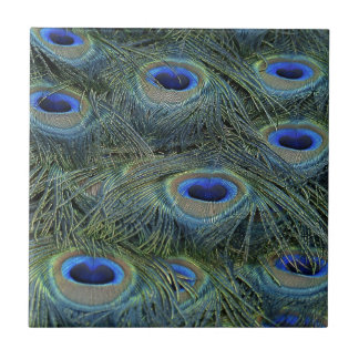 Peacock Feathers Ceramic Tile