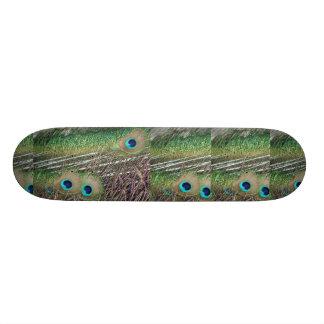 Peacock feathers close up peafowl design skateboard