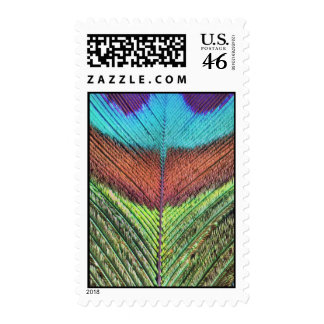 Peacock feather's close up stamps