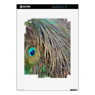 Peacock Feathers Dashing Colors Skins For The iPad 2