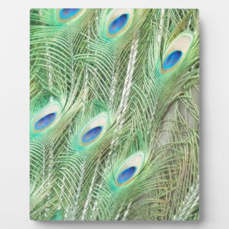 Peacock Feathers Display Plaque