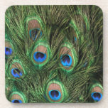 Peacock Feathers Drink Coasters
