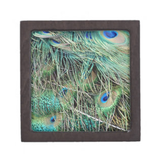 Peacock Feathers Exotic Growth New Eyes Gift Box