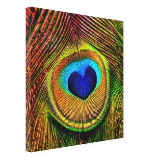 Peacock Feathers Eye of Love Stretched Canvas Print