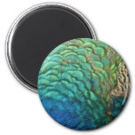 Peacock Feathers I Colorful Abstract Nature Design 2 Inch Round Magnet