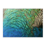 Peacock Feathers I Colorful Abstract Nature Design Acrylic Print