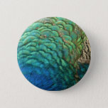 Peacock Feathers I Colorful Abstract Nature Design Button