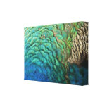 Peacock Feathers I Colorful Abstract Nature Design Canvas Print