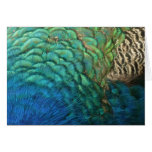 Peacock Feathers I Colorful Abstract Nature Design Card
