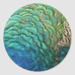 Peacock Feathers I Colorful Abstract Nature Design Classic Round Sticker
