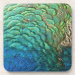 Peacock Feathers I Colorful Abstract Nature Design Drink Coaster