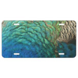 Peacock Feathers I Colorful Abstract Nature Design License Plate
